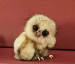 The Owlet that Started it All