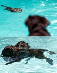 cat-and-dog-in-a-pool-4842-1234821677-6