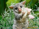 cute-baby-animal-pics