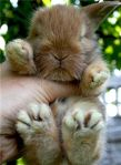 cute-little-bunny