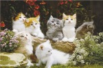 lgwiz02715+fluffy-kittens-cute-baby-cats-poster
