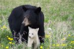 moma and baby bear