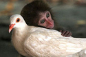 Monkey_And_Pigeon