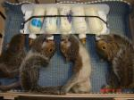 squirrel_rack