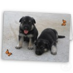 adorable_puppies_card-p137482833184423642v1qr_325