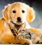 cat-and-dog2a