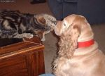 Cat_Vs_Dog